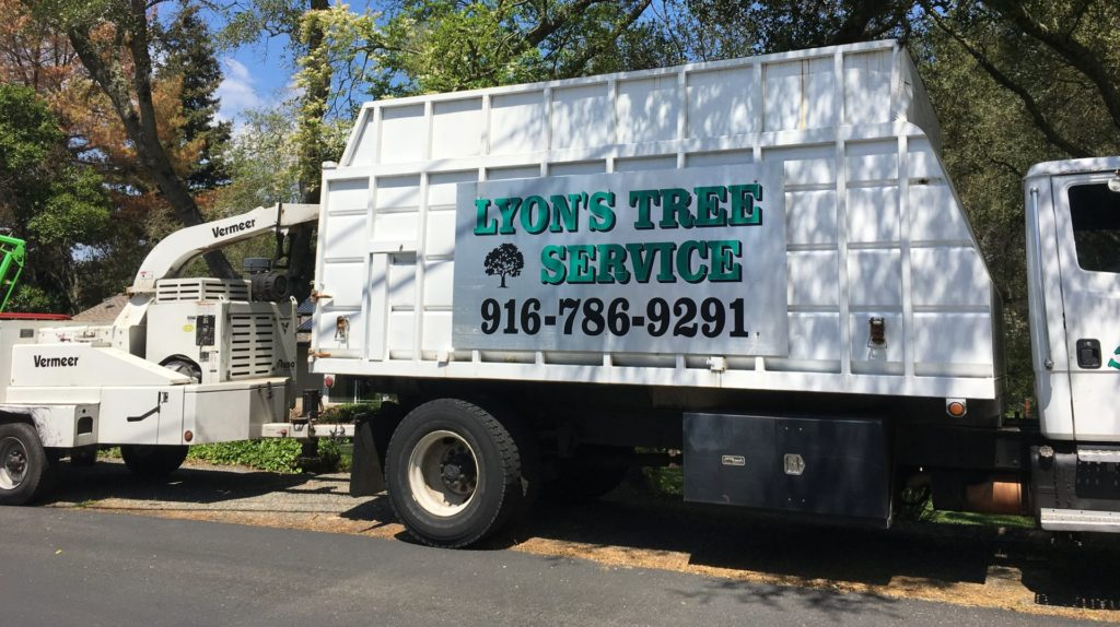 tree service for rocklin and roseville ca